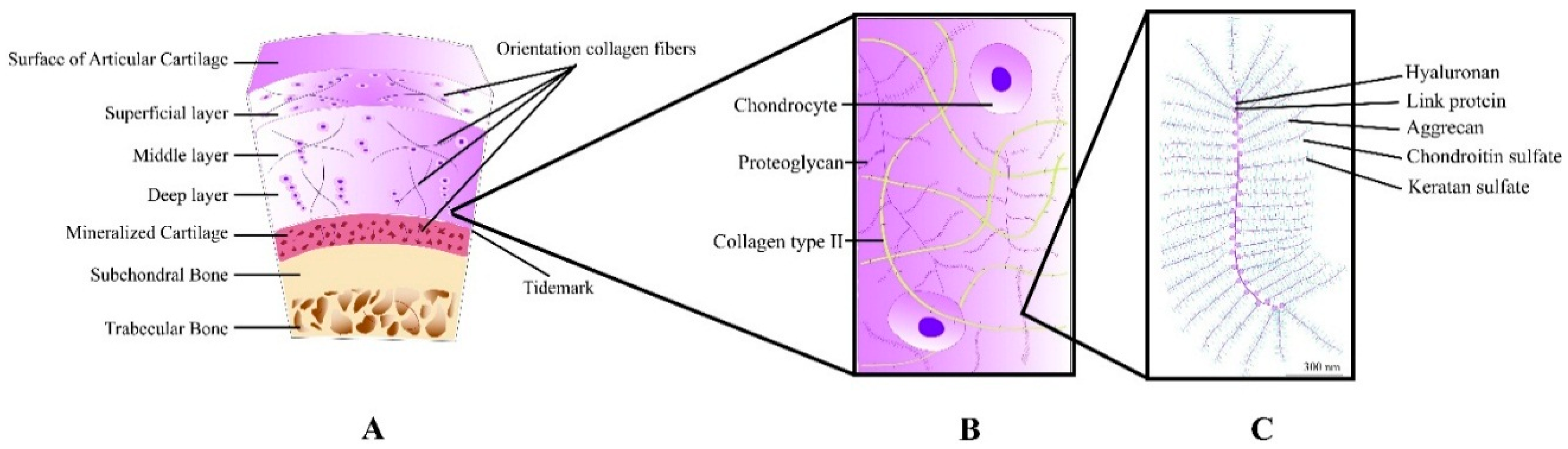 Polymers | Free Full-Text | Polymers in Cartilage Defect