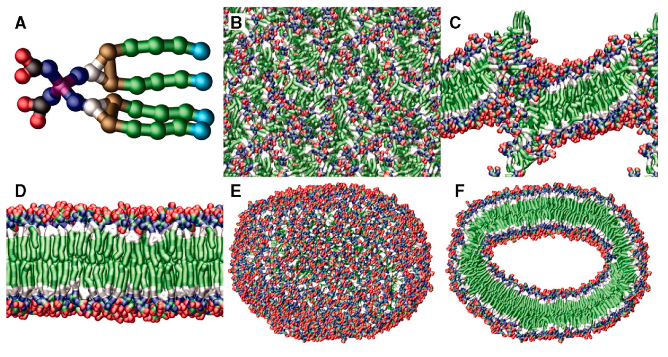 polymeric vesicles Polymer vesicles, also known as polymersomes, are finding increasing applications in biomedical field, including drug delivery, gene therapy, magnetic resonance imaging, theranostics, etc this is due to their intrinsic hollow nanostructure and compartmentalized domains with diverse functionalities.