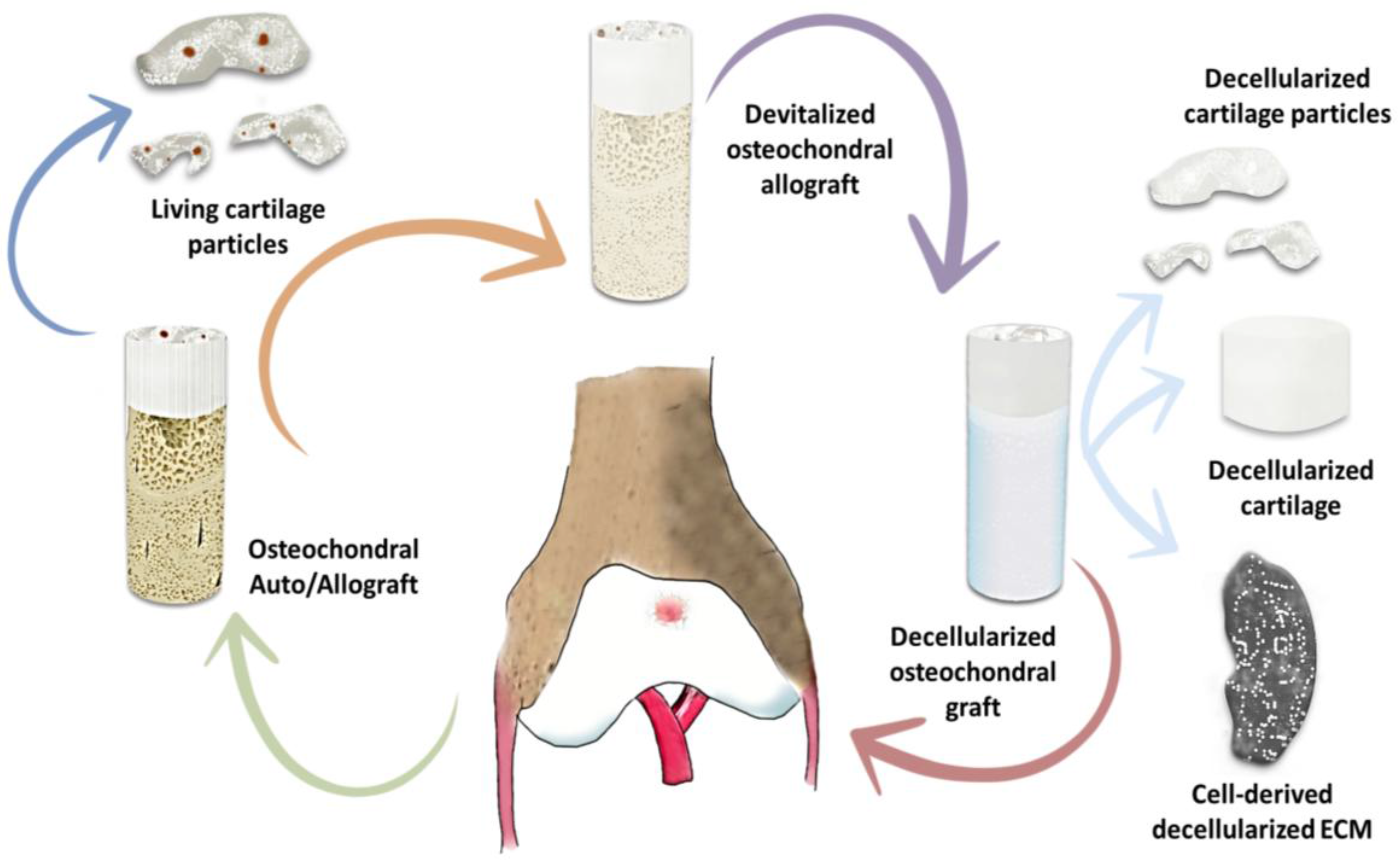 polymers free full text hydrogels for cartilage regeneration