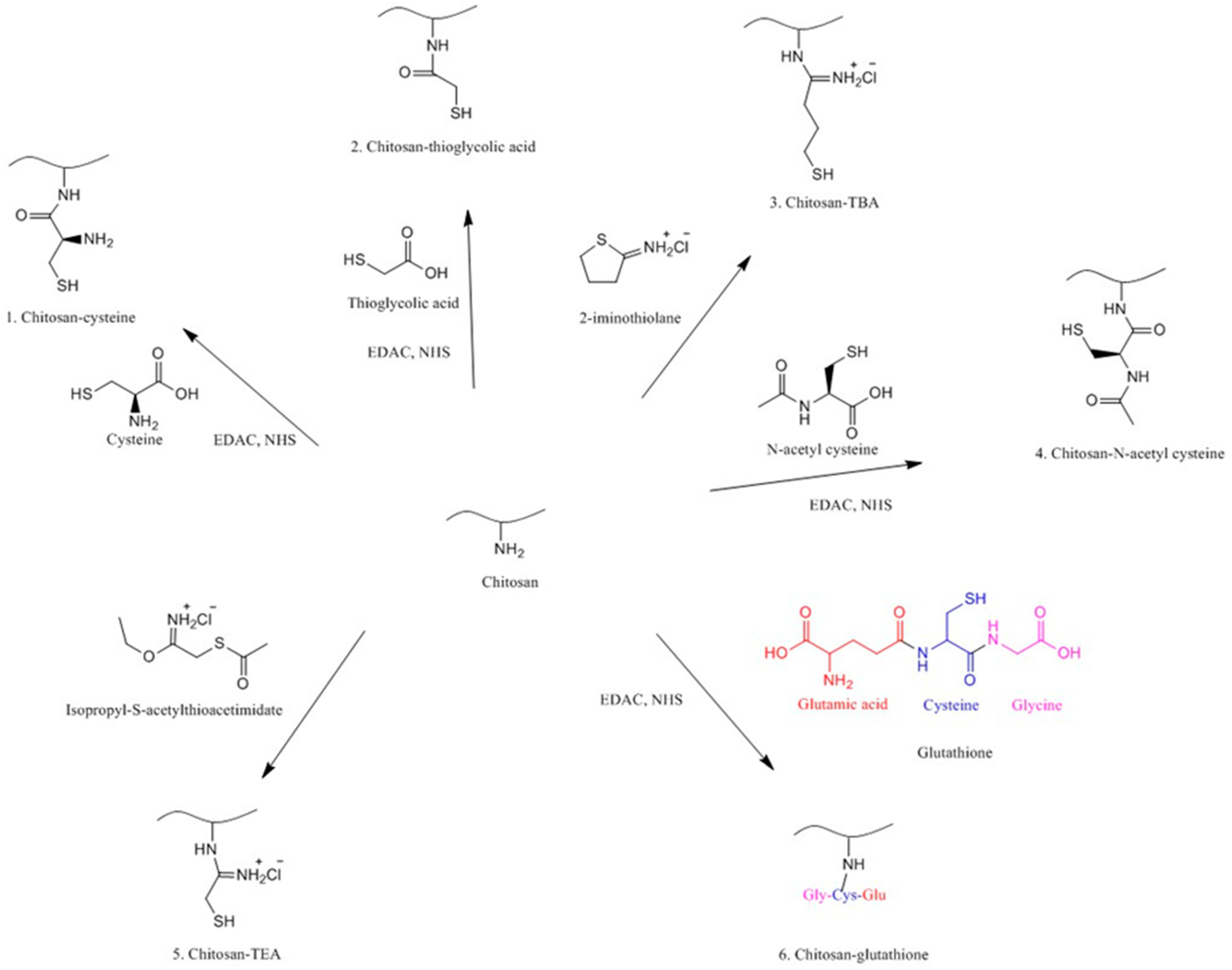 Polymers Free Full Text Chitosan And Its Derivatives