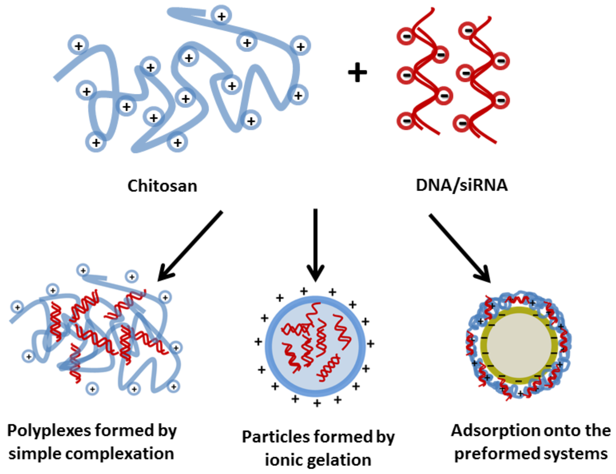 Polymers | Free Full-Text | Chitosan in Non-Viral Gene