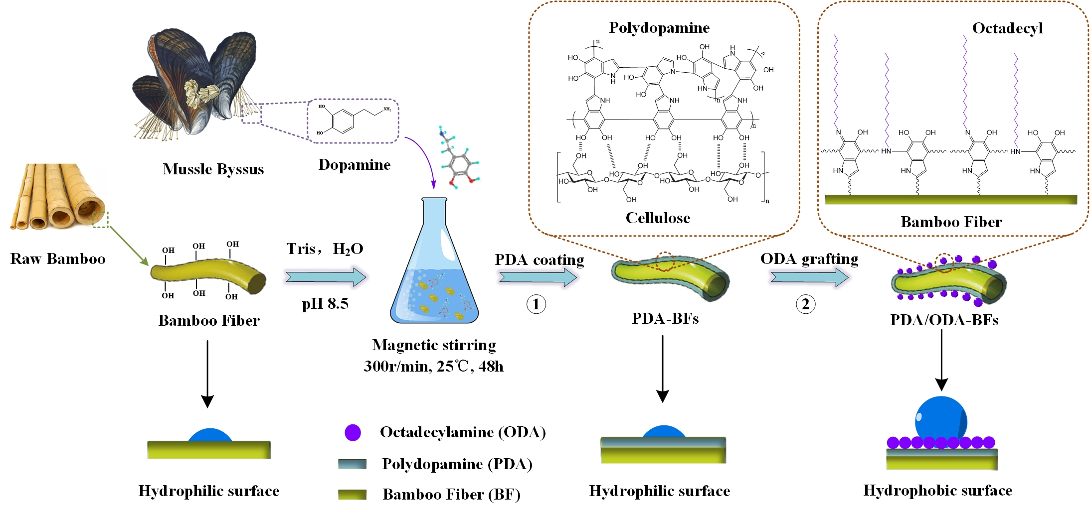 Polymers Free Full Text Mussel Inspired Polydopamine