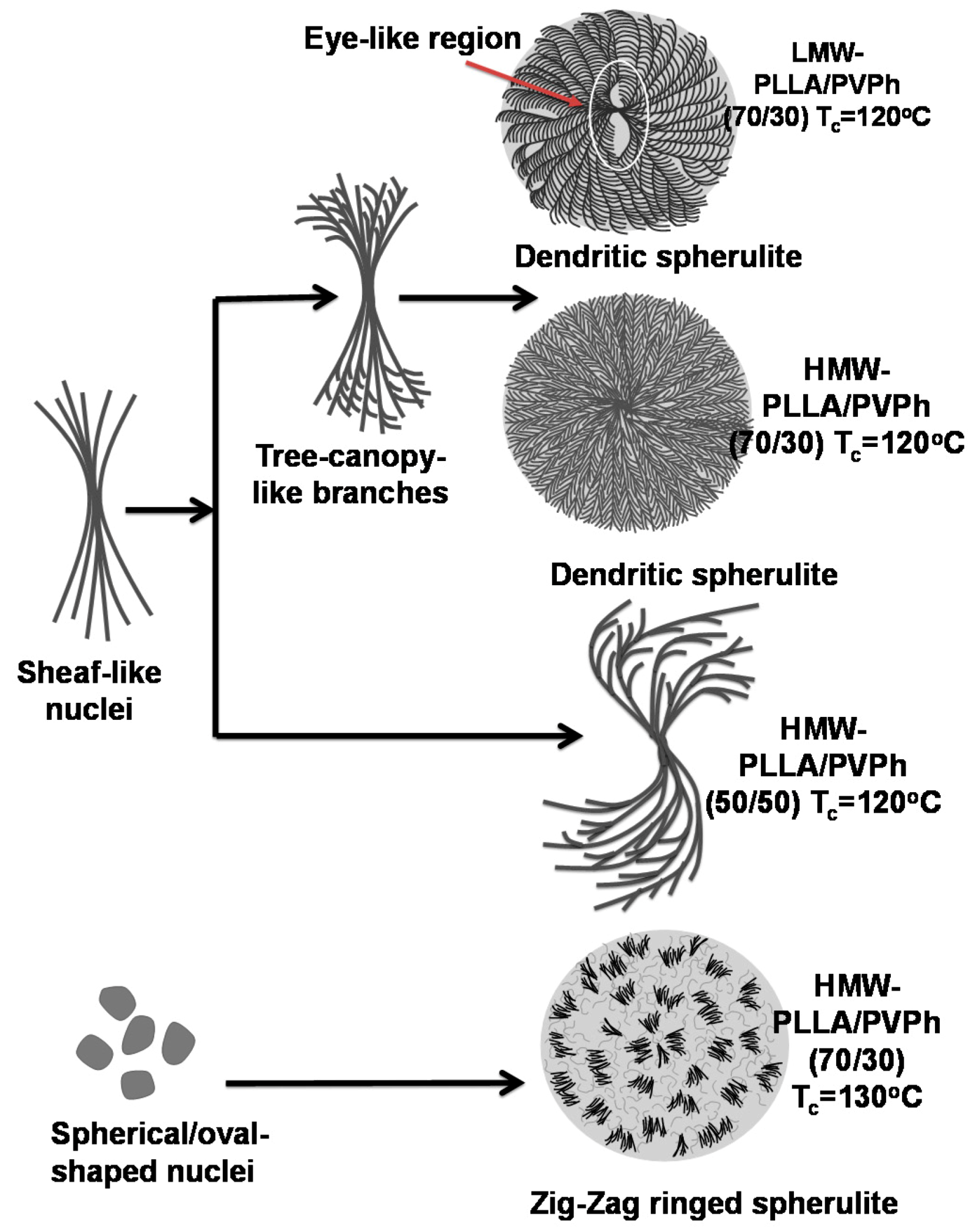 Polymers Free Full Text Lamellae Assembly In Dendritic