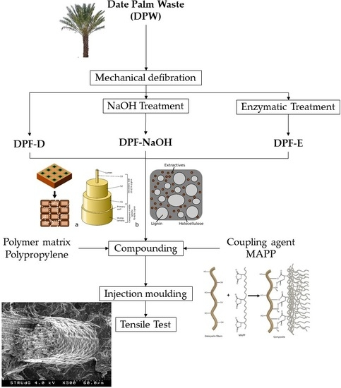 Polymers Free Full Text High Yield Lignocellulosic Fibers From Date Palm Biomass As Reinforcement In Polypropylene Composites Effect Of Fiber Treatment On Composite Properties Html