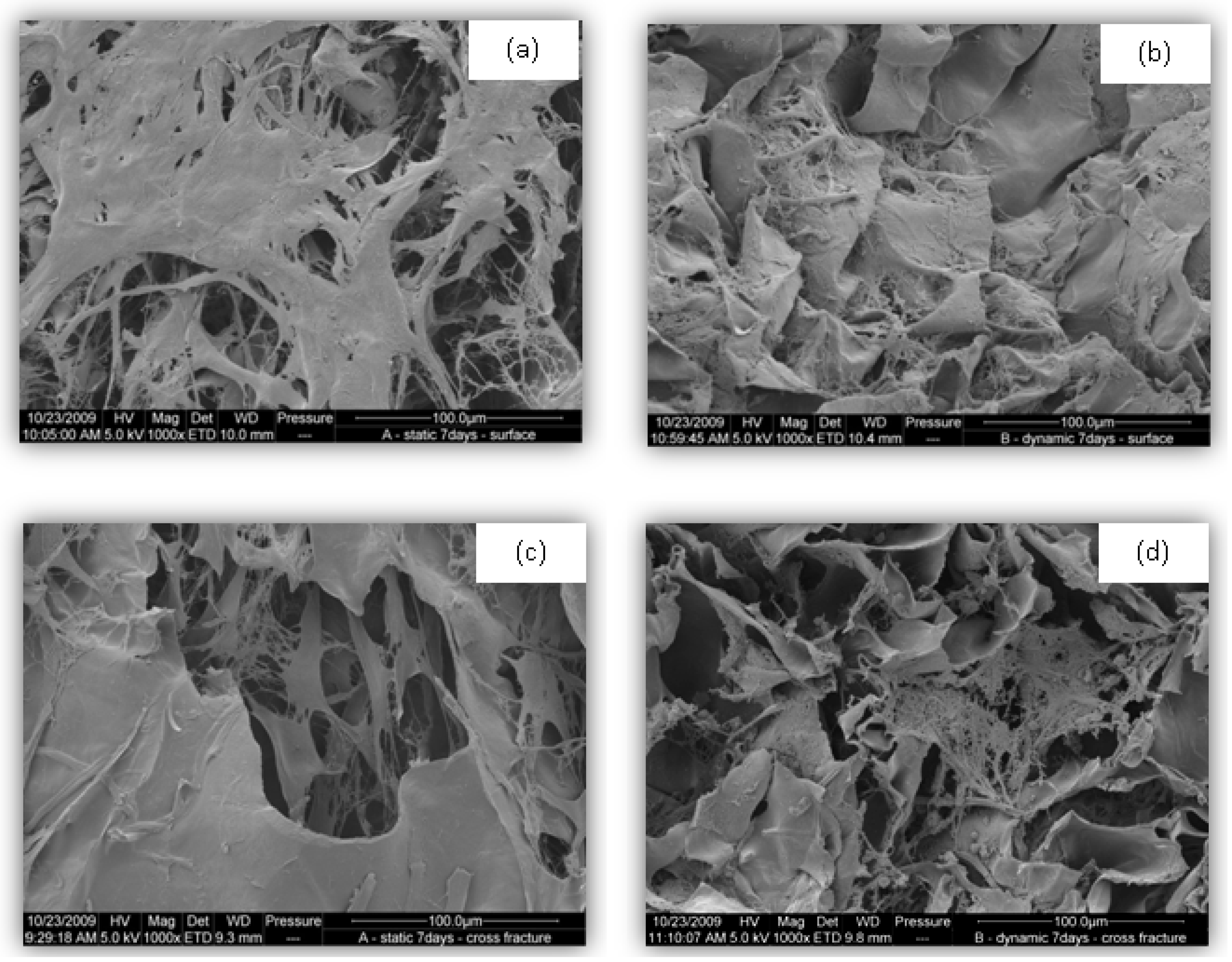 bioreactor design for tissue engineering Tissue engineering bioreactor by properties of the tissue between the epithelium and design for the vocal fold bioreactor the current design does a decent.