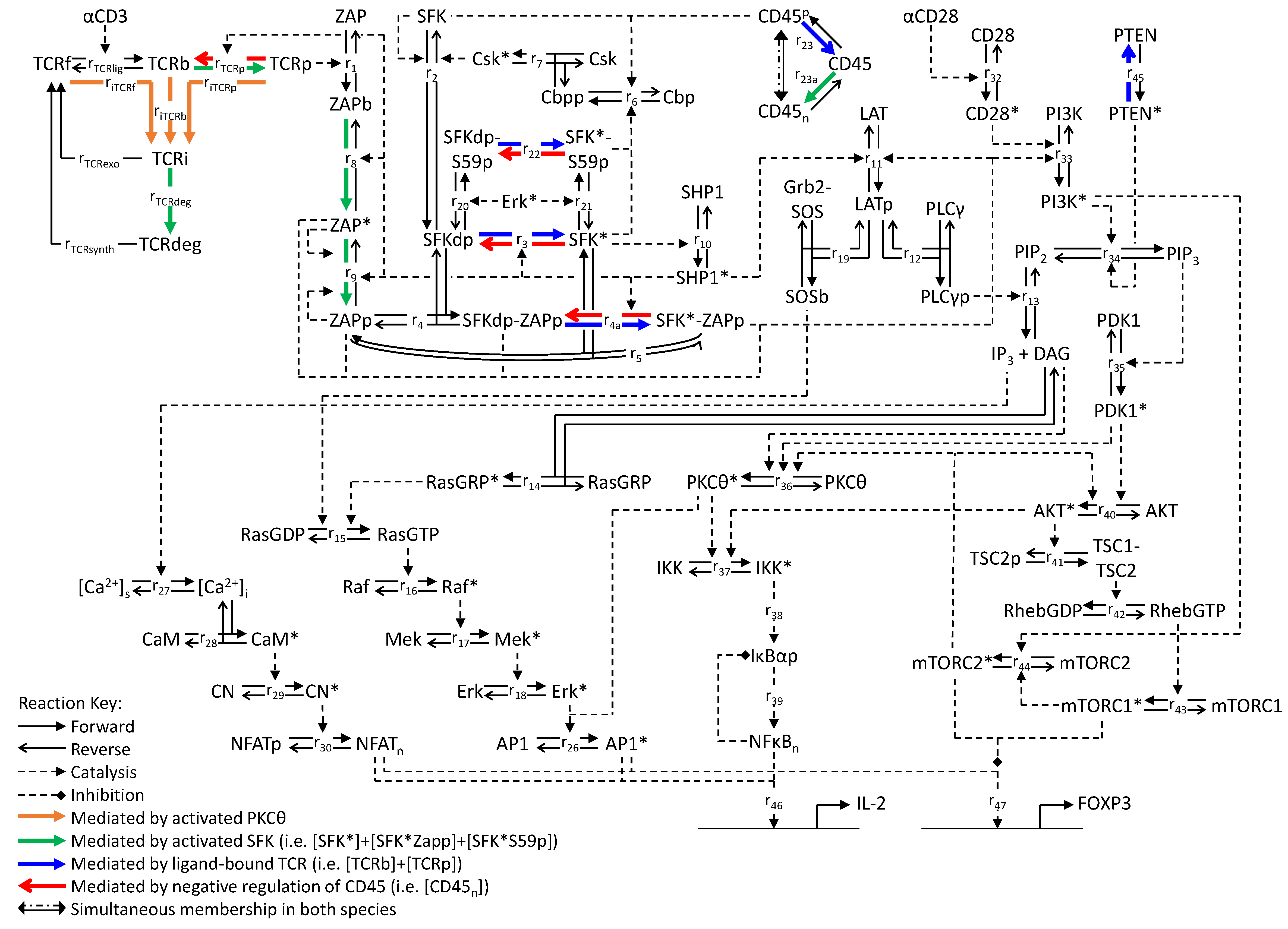 Processes Free Full Text Resolving Early Signaling Events In T Bolens 1253 Wiring Diagram 02 00867 G001 1024