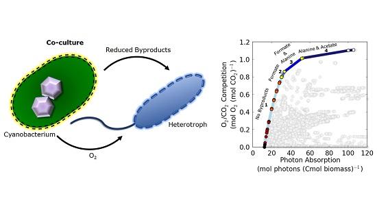 An analysis of cyanobacteria