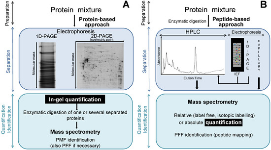 Comparative and Quantitative Global Proteomics Approaches: An Overview