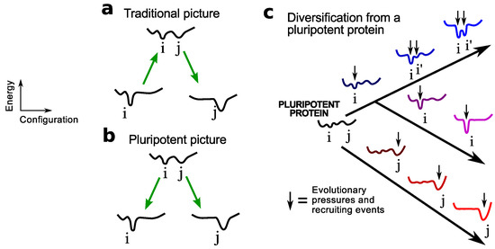 Origination of the Protein Fold Repertoire from Oily Pluripotent Peptides