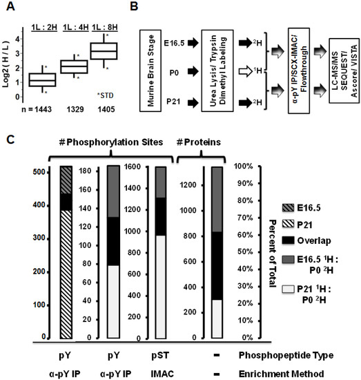 Developmentally-Dynamic Murine Brain Proteomes and Phosphoproteomes Revealed by Quantitative Proteomics