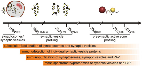 The Proteome of the Murine Presynaptic Active Zone