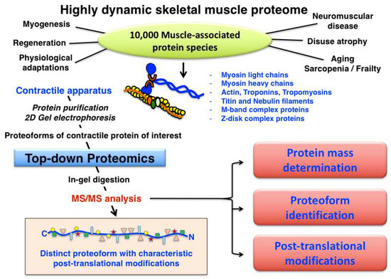 Proteomes | An Open Access Journal from MDPI