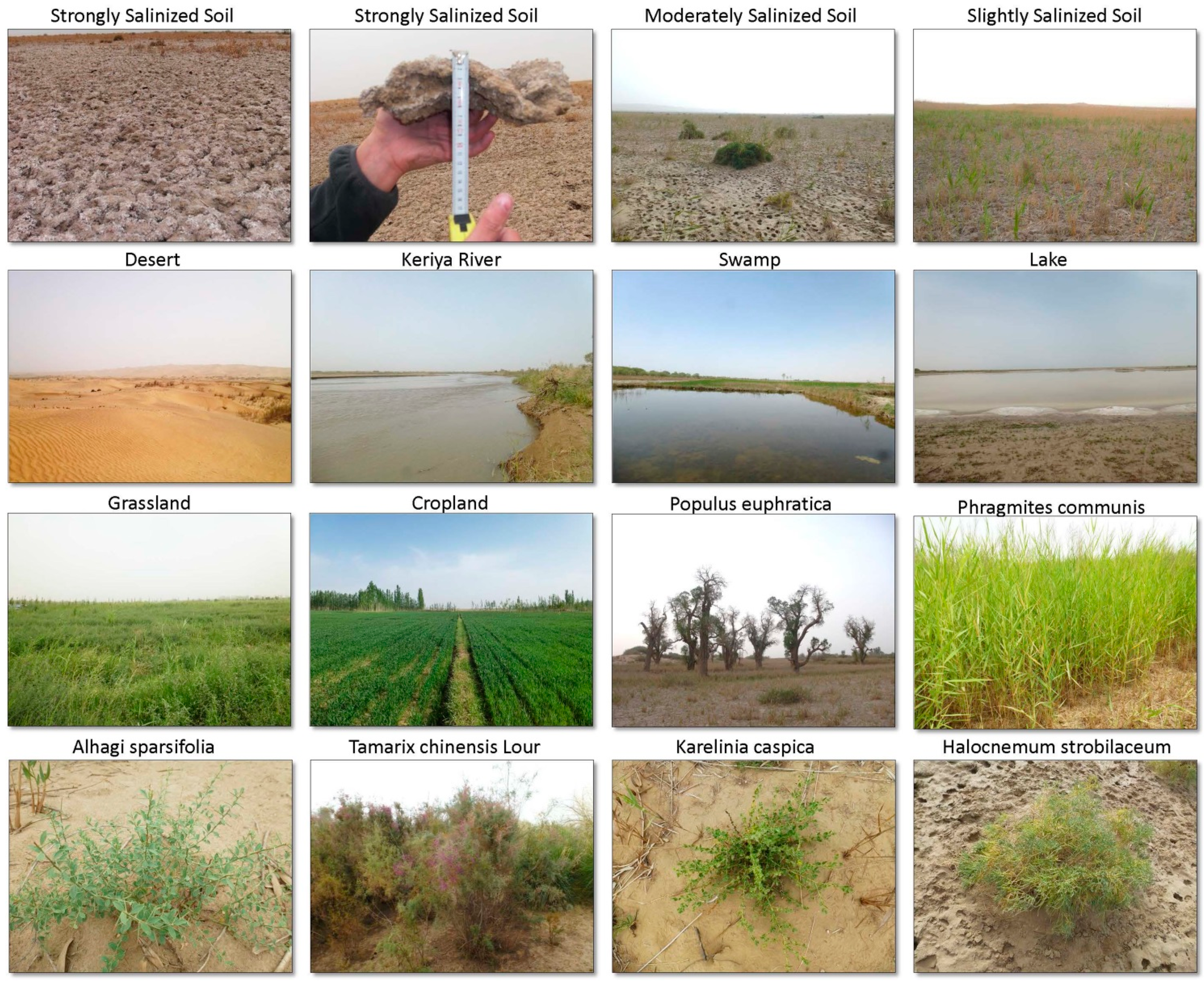 Remote sensing free full text monitoring soil for Different uses of soil