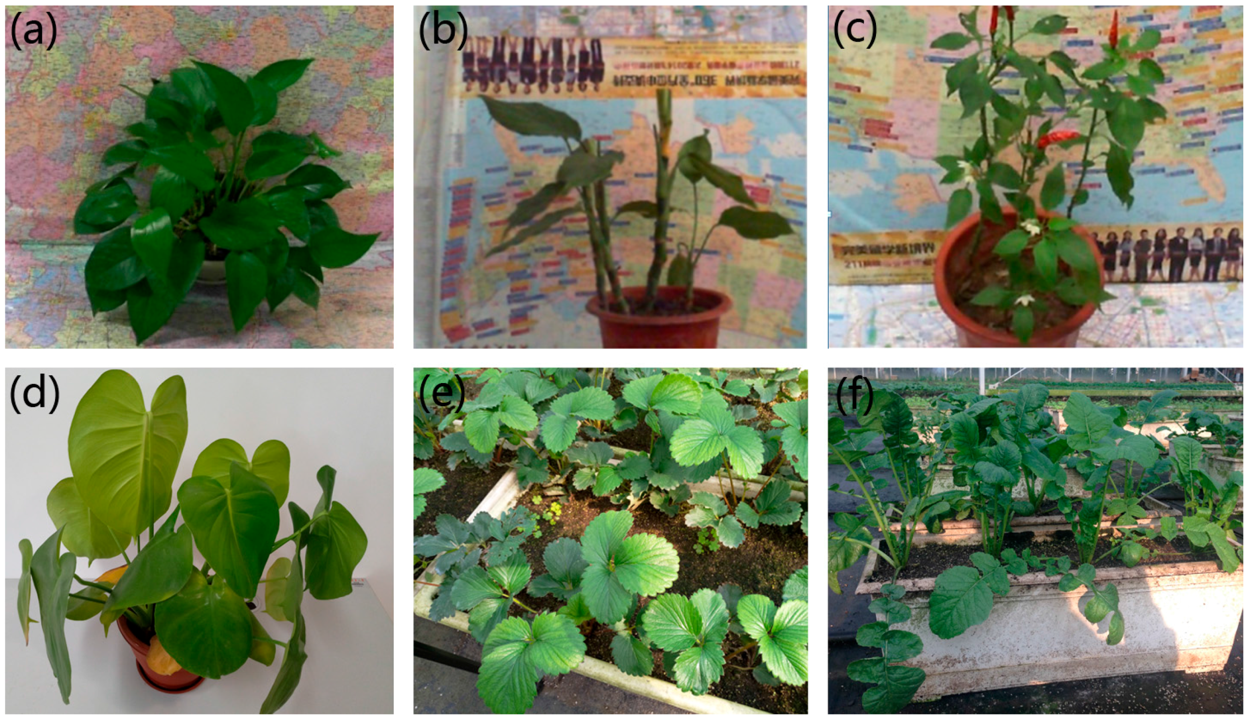 Remote Sensing Free Full Text 3d Imaging Of Greenhouse Plants