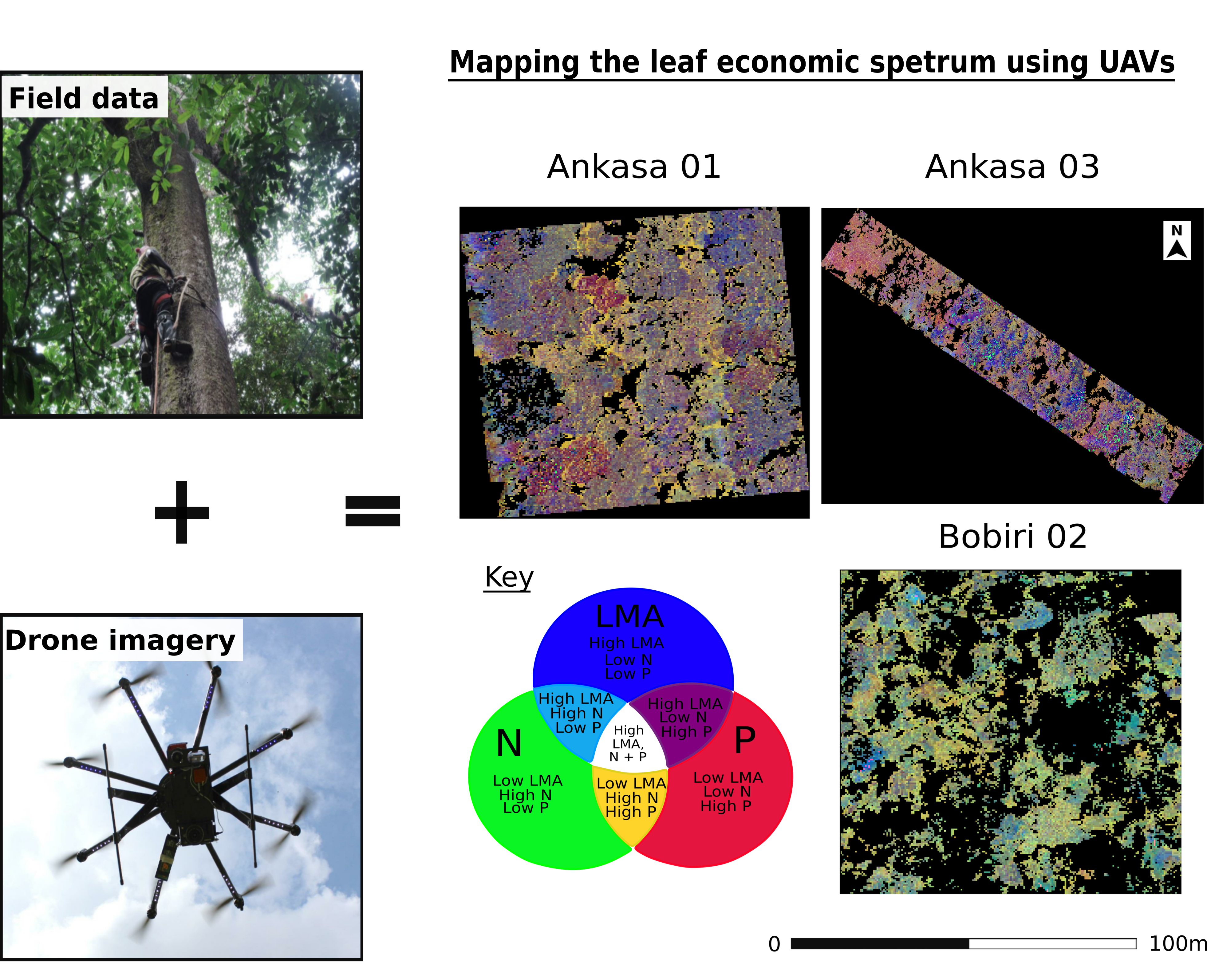 Remote Sensing Free Full Text Mapping The Leaf Economic Spectrum Across West African Tropical Forests Using Uav Acquired Hyperspectral Imagery Html