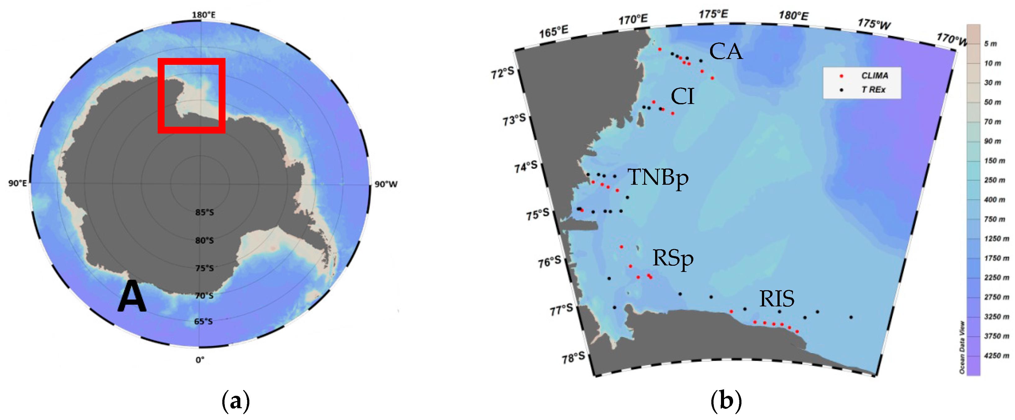Biogeochemistry of the Ross Sea