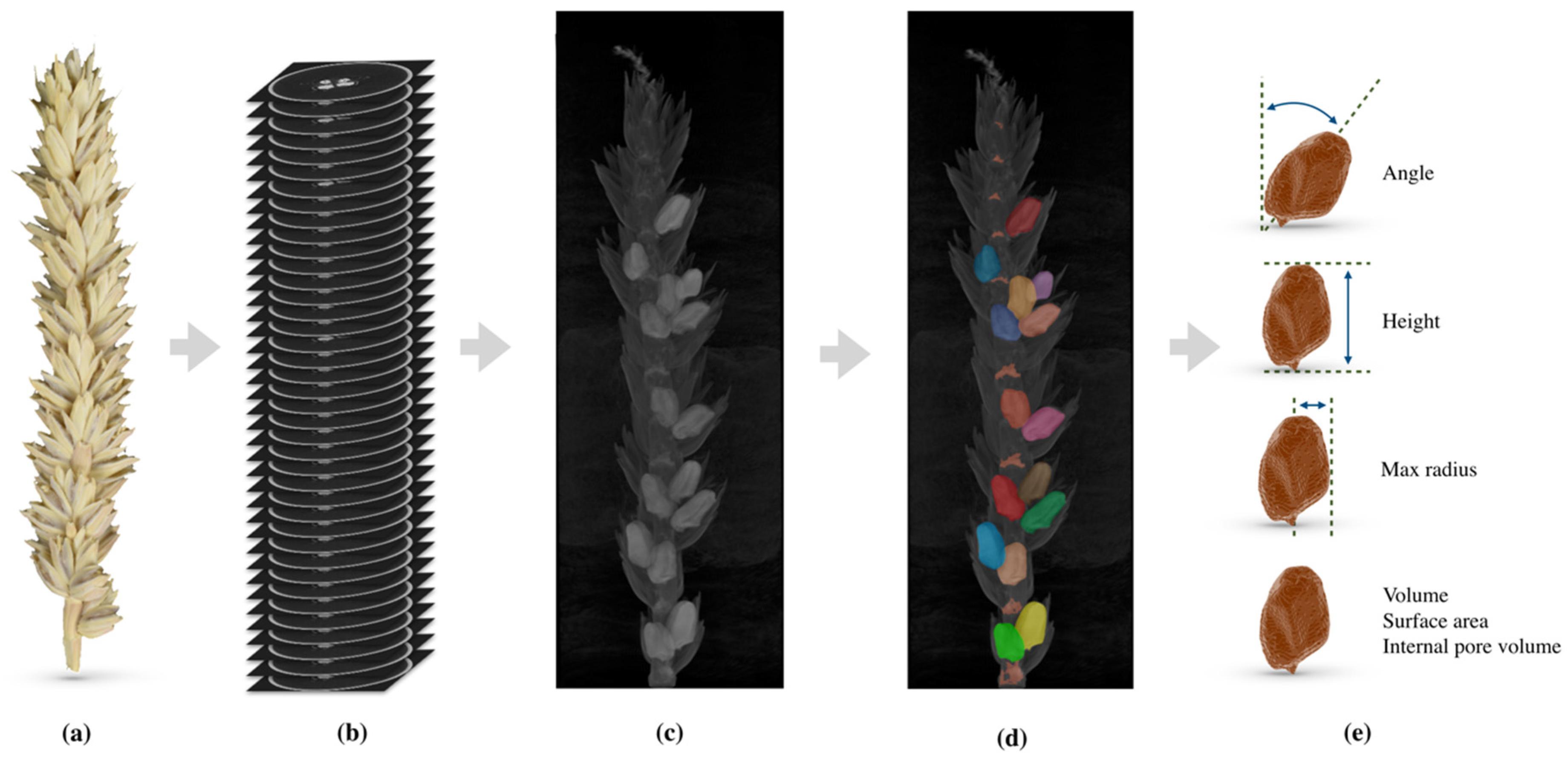 Table A Langer D Angle remote sensing | free full-text | 3d morphological