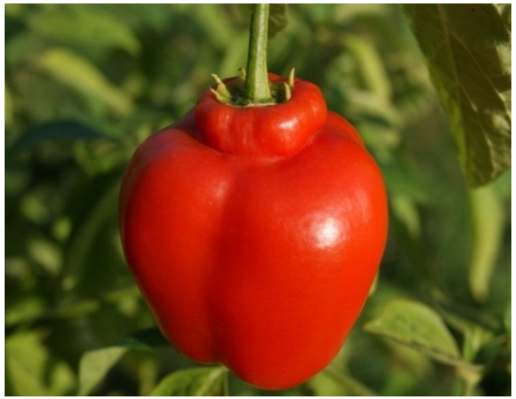 Resources | Free Full-Text | Biodiversity of Food Species of
