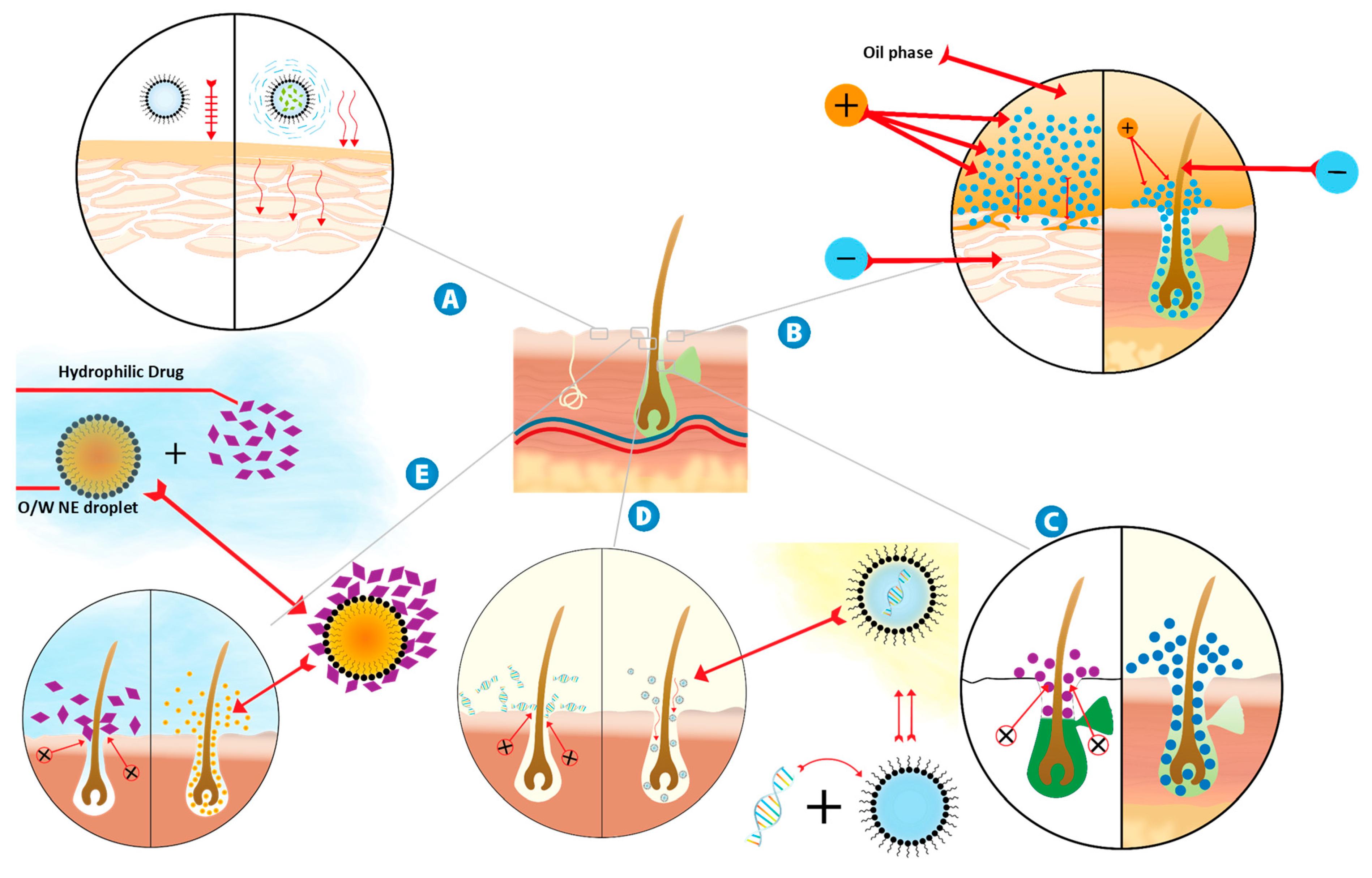 Sci  Pharm  | Free Full-Text | Nanoemulsion: A Review on