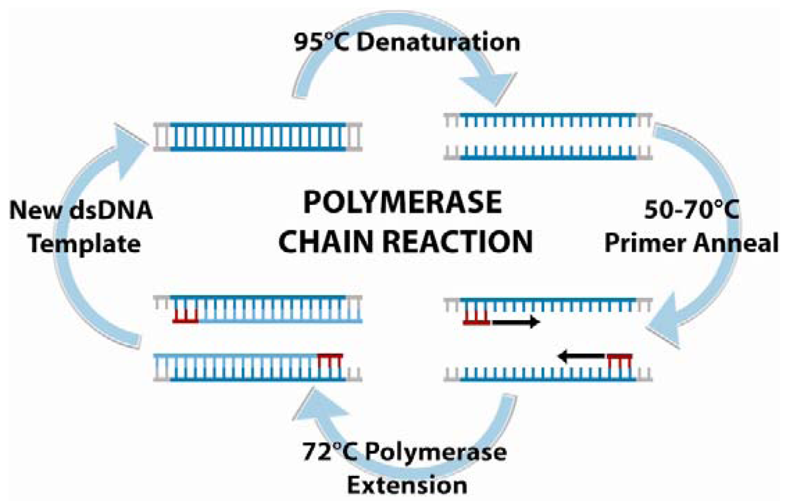 """scientific paper on polymerase chain reaction Kary mullis tells how the idea for pcr came to him out of the blue in """"the unusual origin of the polymerase chain reaction,"""" scientific american, april 1990, p 56–65 the medical applications of pcr change almost daily."""