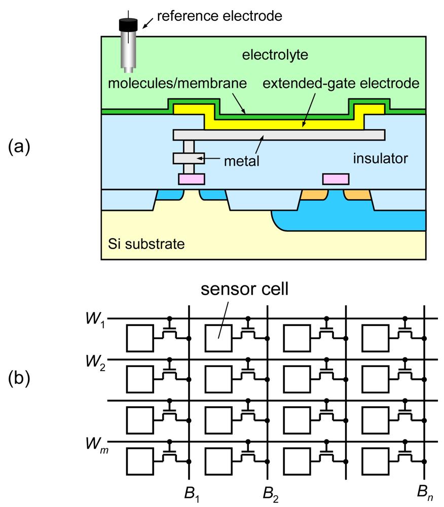 Sensors | Free Full-Text | An Integrated ISFET Sensor Array | HTML