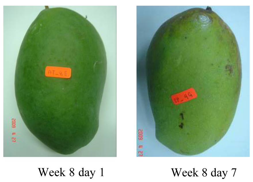 the feasibility of mango magnifera indica