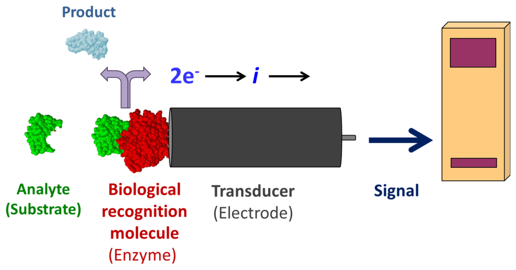 Biosensors: Features, Principle and Types (With Diagram)