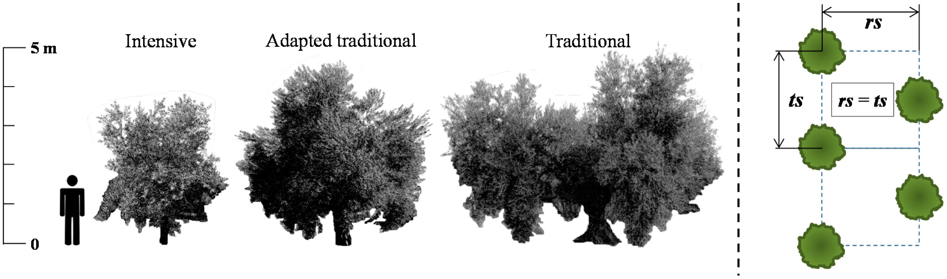 types of binary trees pdf