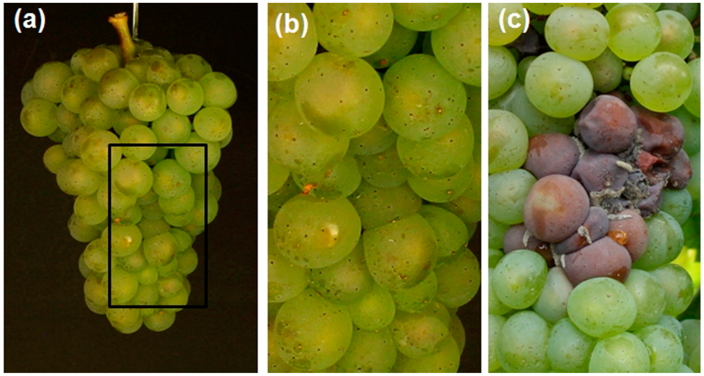 Sensors | Free Full-Text | Impedance of the Grape Berry Cuticle as a ...