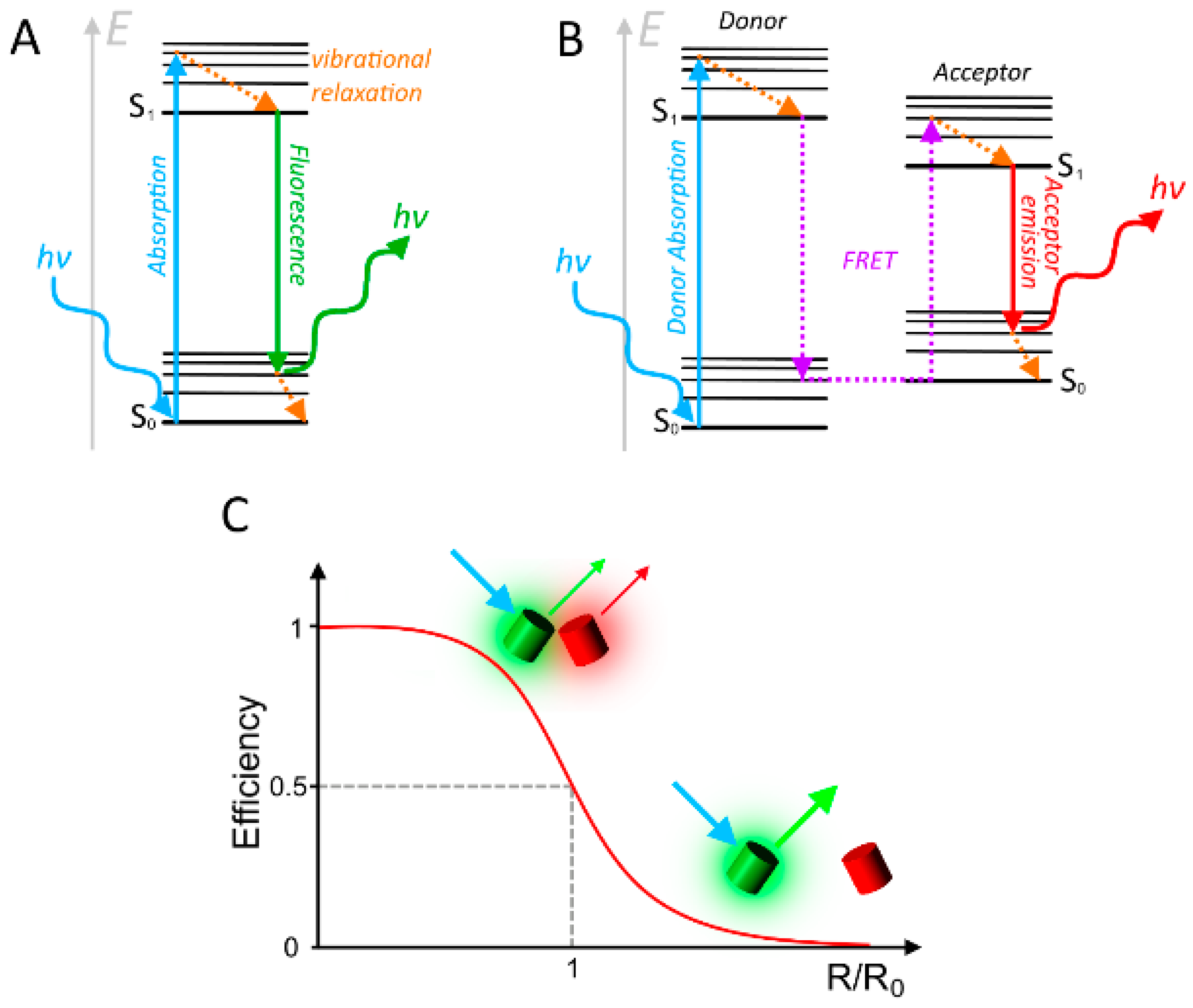 Sensors free full text fluorescent proteins as genetically no ccuart Images