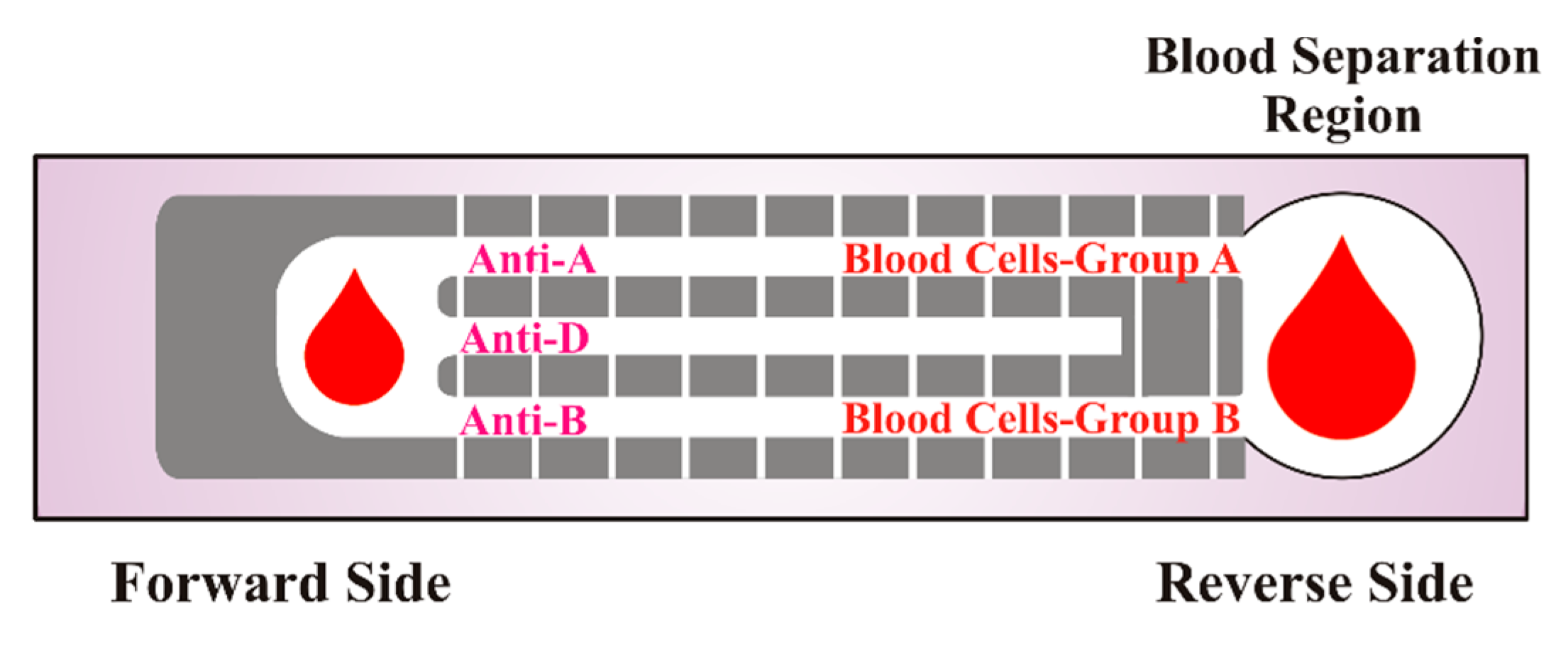 reverse blood typing procedure