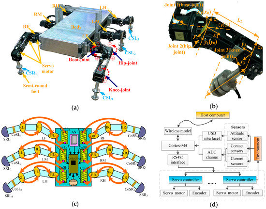Trajectory Correction and Locomotion Analysis of a Hexapod Walking Robot with Semi-Round Rigid Feet