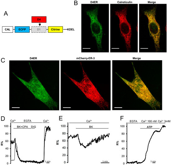 Characterization of the ER-Targeted Low Affinity Ca2  Probe D4ER