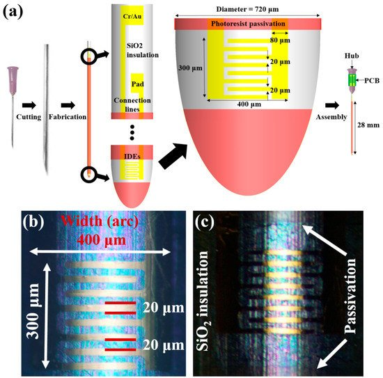 Improvement of Depth Profiling into Biotissues Using Micro Electrical Impedance Spectroscopy on a Needle with Selective Passivation