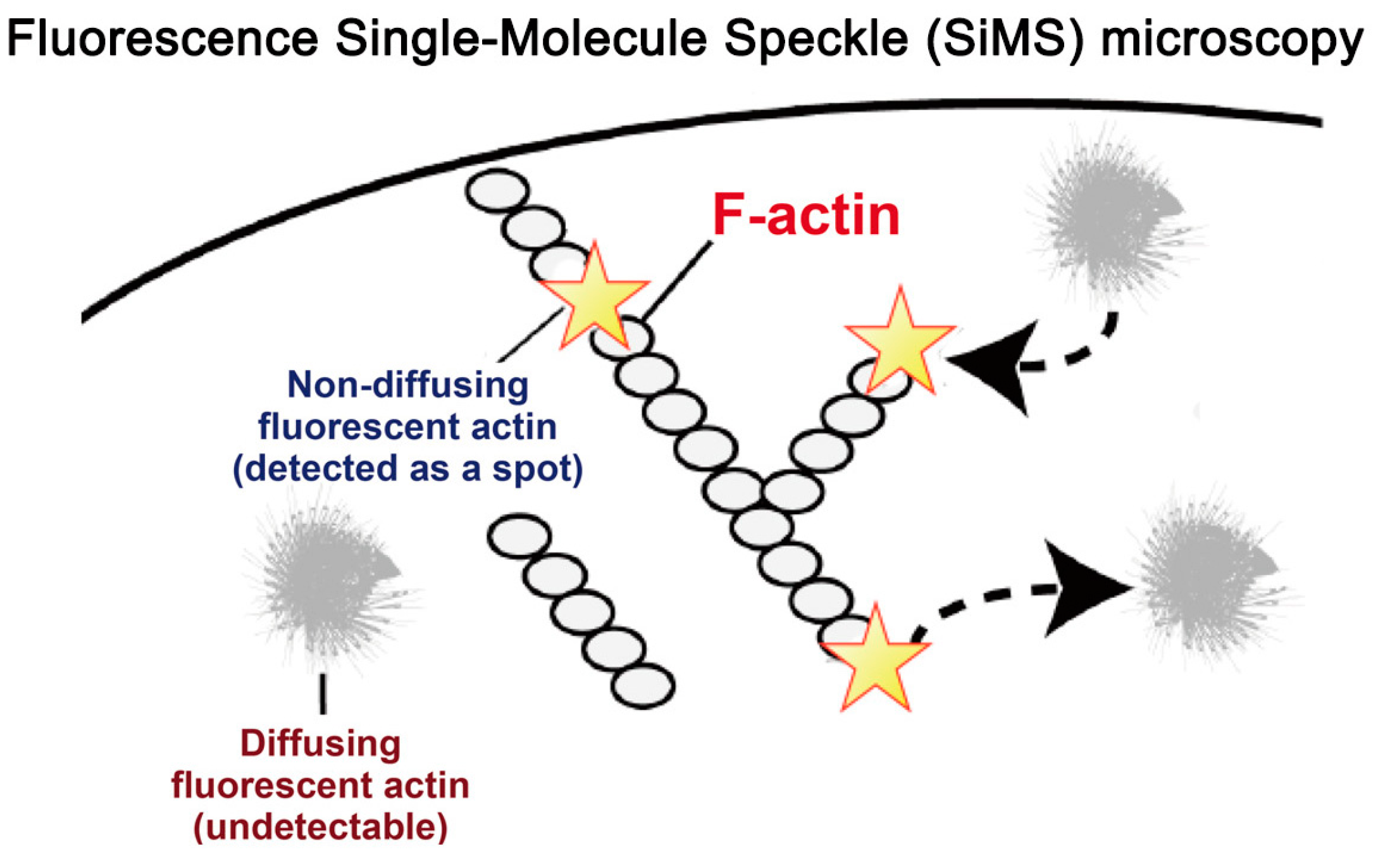 Sensors free full text overview of single molecule speckle no pooptronica