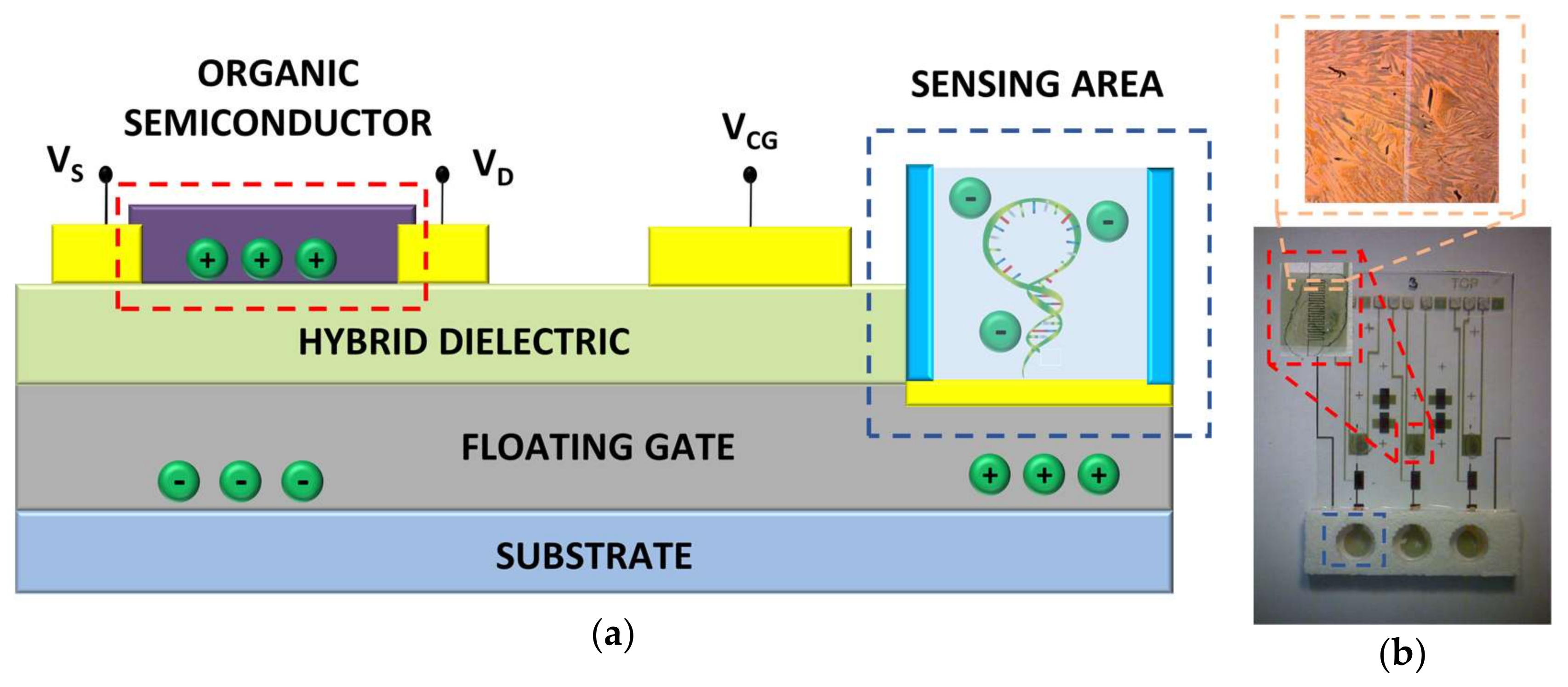 Sensors | Free Full-Text | Electronic Detection of DNA Hybridization