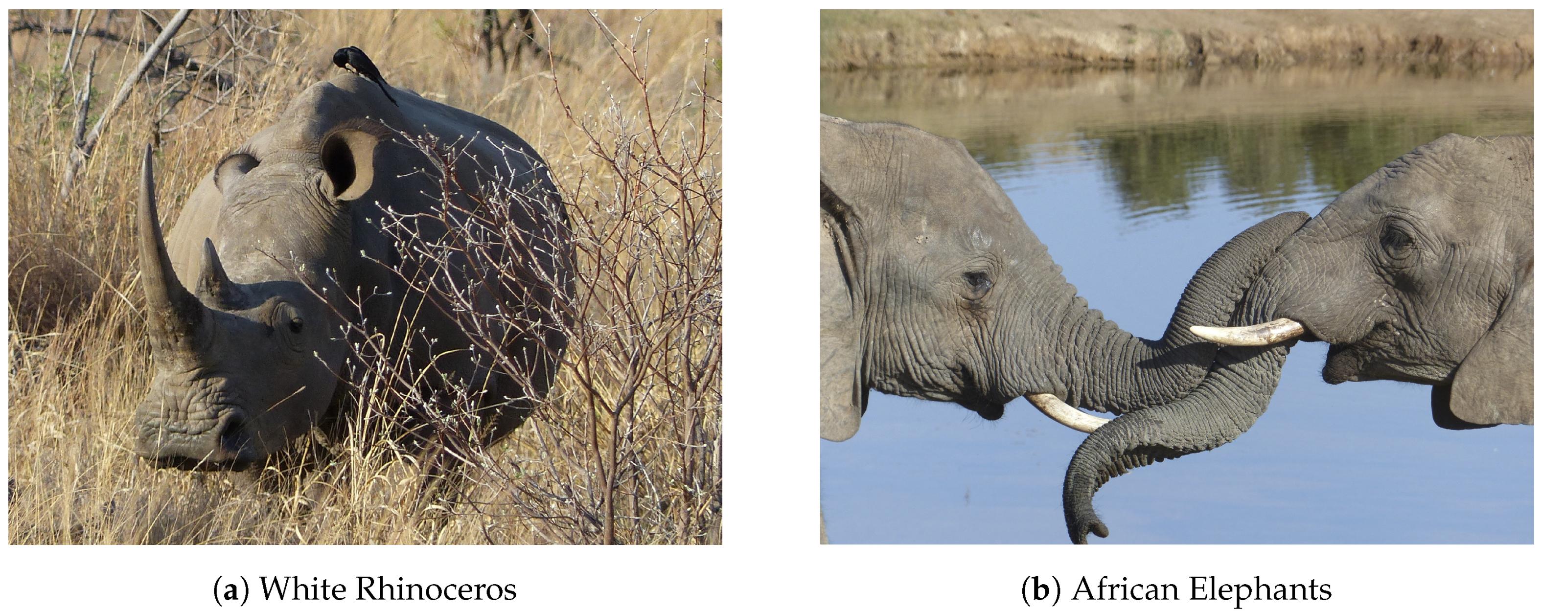 Sensors | Free Full-Text | Poaching Detection Technologies—A