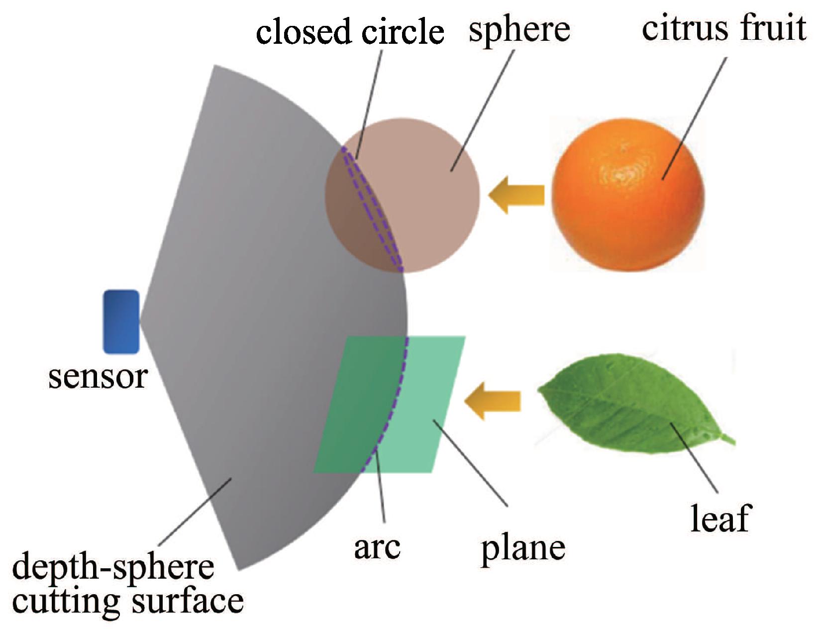 Sensors Free Full Text Experiments And Analysis Of Close Shot Lemon Battery Diagram Vegetable No