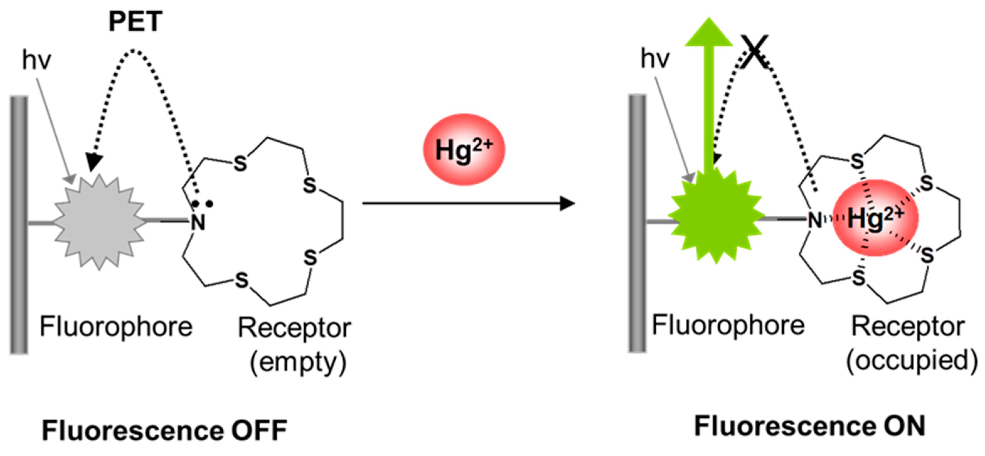 A turn-on fluorescent sensor for Hg2+ detection based on