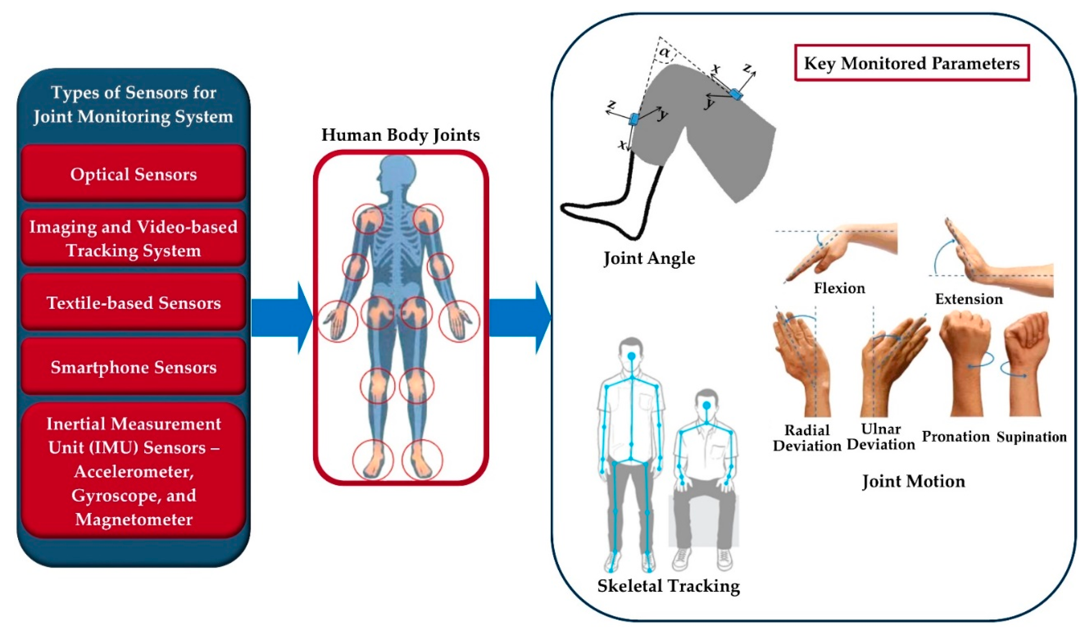 Saddle Joint Diagram Basic Structure And Function Of Human Joints