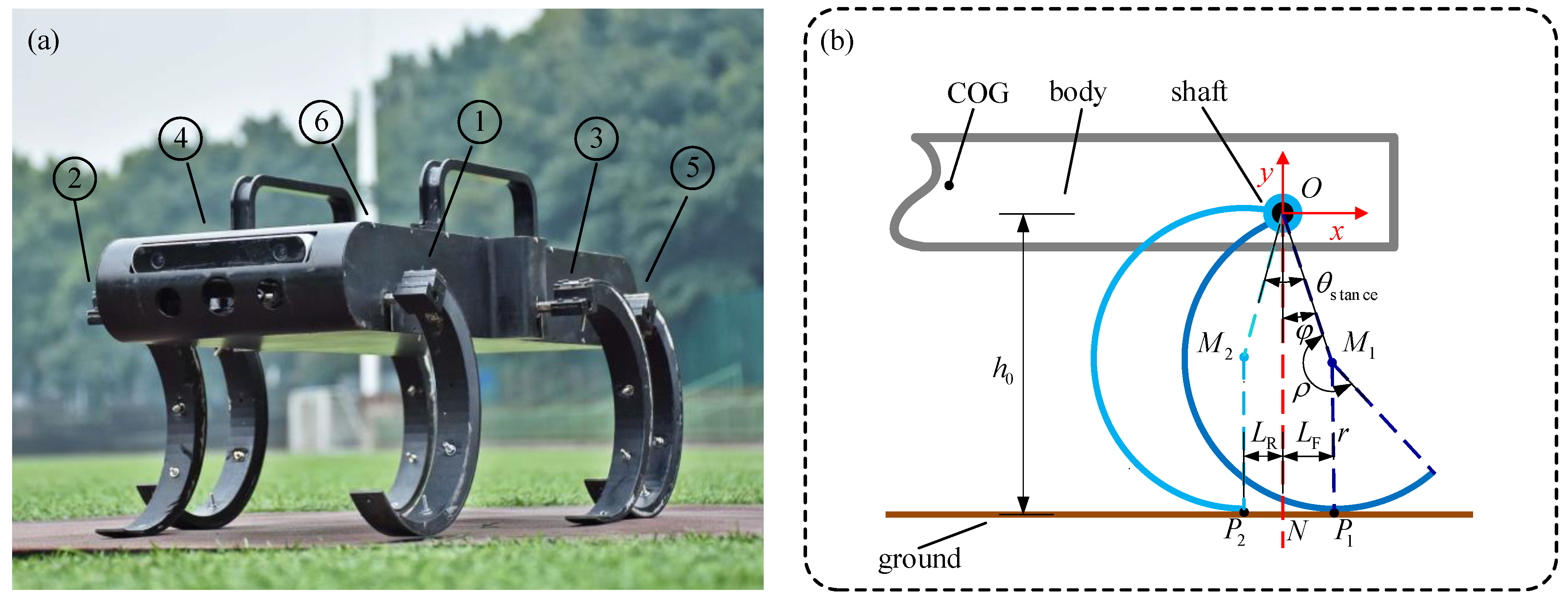 Sensors | Free Full-Text | CPG-Based Gait Generation of the