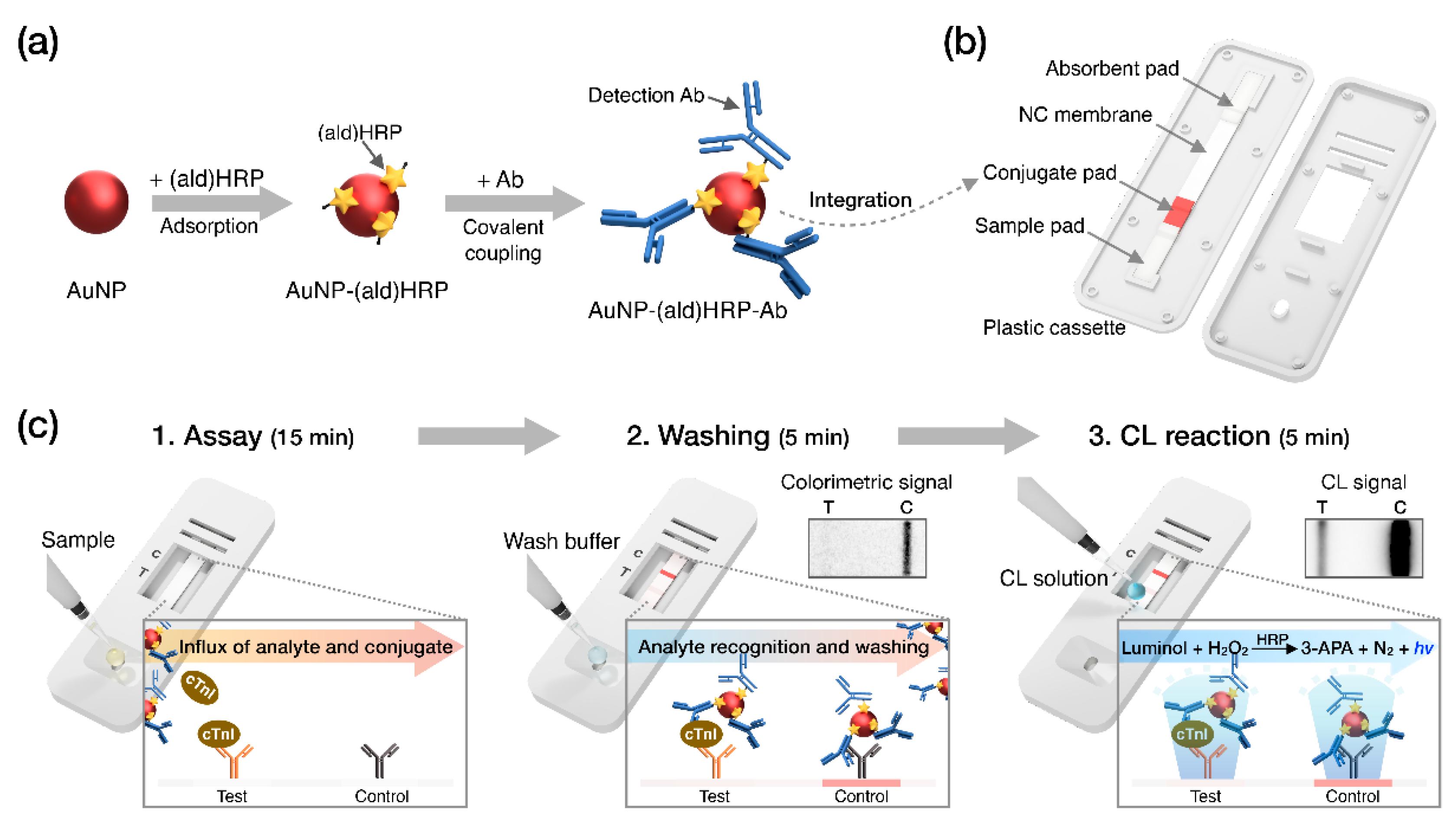 Sensors | Free Full-Text | Highly Sensitive Chemiluminescence-Based Lateral  Flow Immunoassay for Cardiac Troponin I Detection in Human Serum | HTML
