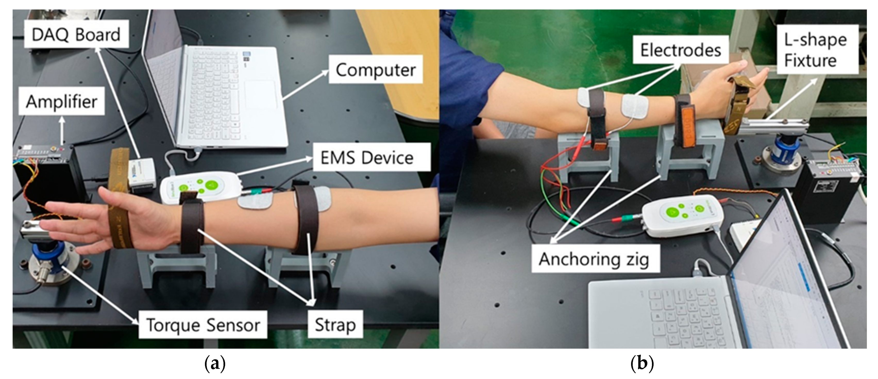Sensors | Free Full-Text | Electrically Elicited Force Response  Characteristics of Forearm Extensor Muscles for Electrical Muscle  Stimulation-Based Haptic Rendering | HTML