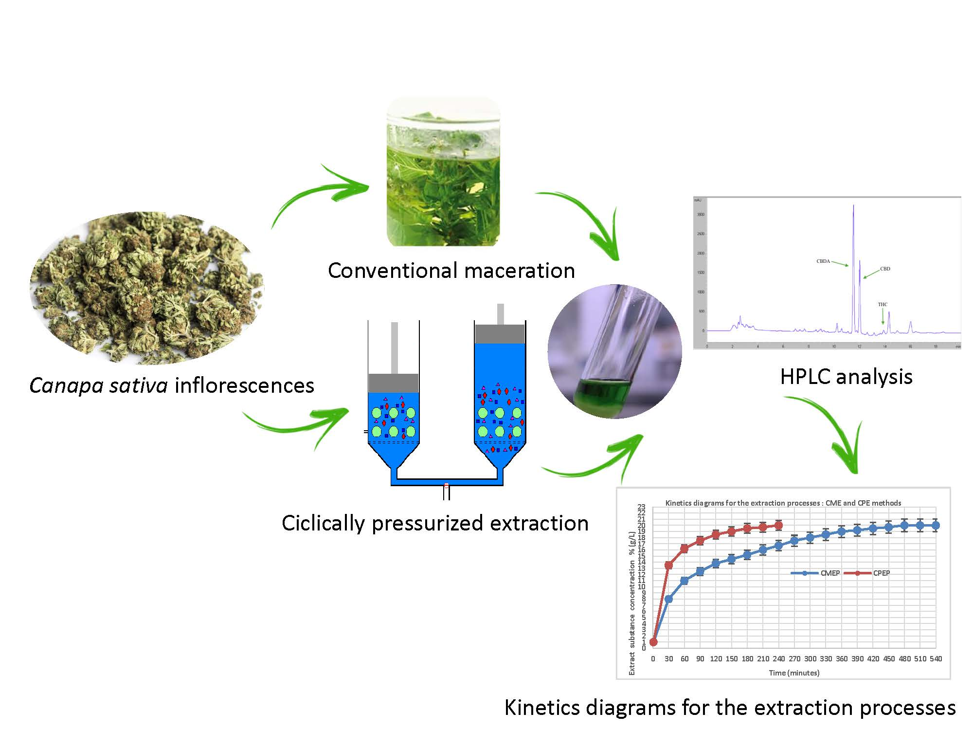 Separations Free Full Text Study Of The Kinetics Of Extraction Process For The Production Of Hemp Inflorescences Extracts By Means Of Conventional Maceration Cm And Rapid Solid Liquid Dynamic Extraction Rslde