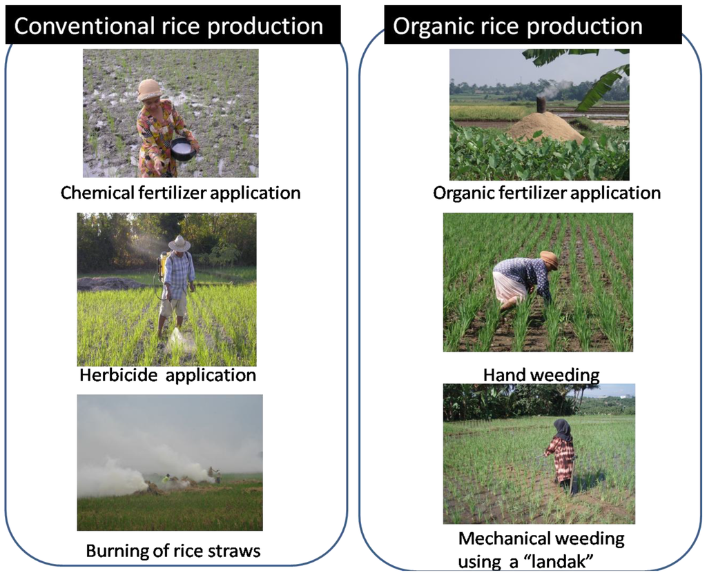 effects of rice straw burning Burning of rice straw is known to induce environmental and health problems (jacob et  effect of paddy straw compost and inorganic fertilizers on grain and straw .