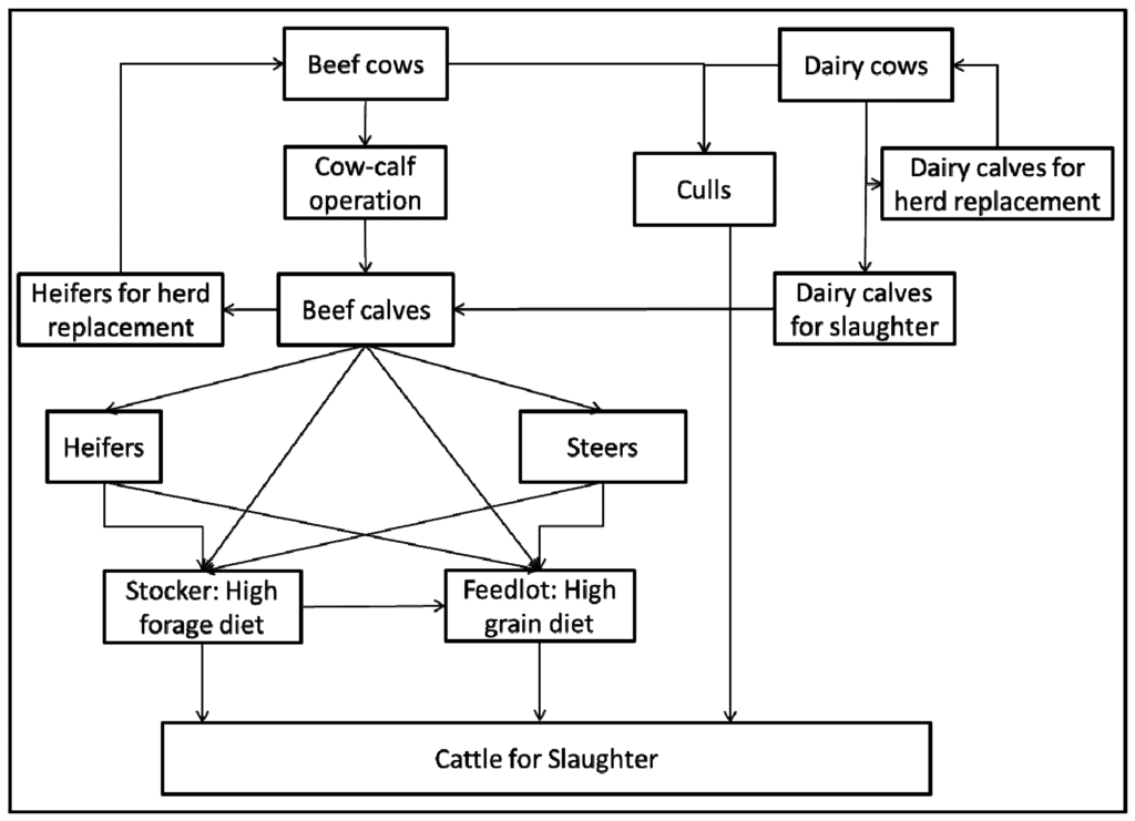 Sustainability | Free Full-Text | Carbon Footprint of Beef ...