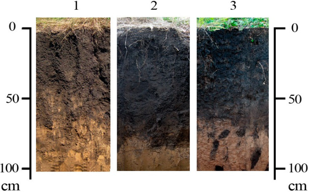 Sustainability free full text history of east european for Pictures of different types of soil with their names
