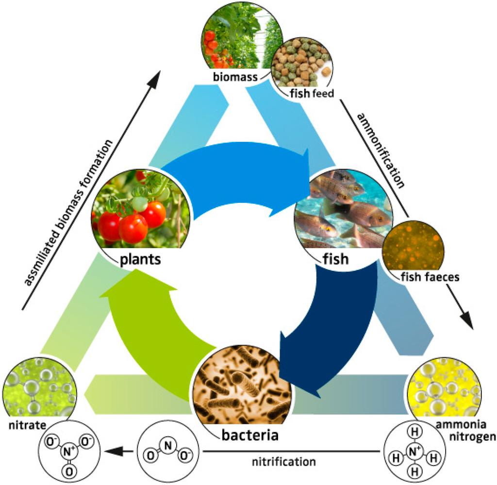 Soilless Gardening /& Fish Culture Hydroponics,Aquaponics,Aquaculture on CD