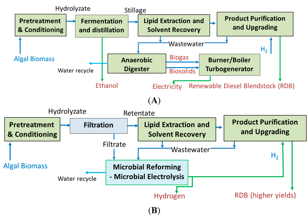 Investigation of Microbial Fuel Cell Performance and Microbial