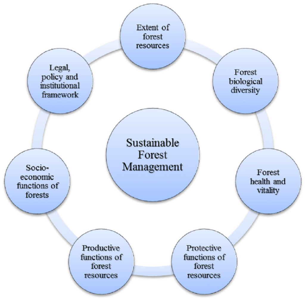 Regulation Markets The Wealth of Forests and Sustainable Forestry